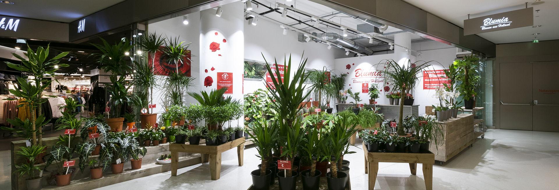 Blumia - frische Blumen aus Holland im Kaufhaus Tyrol